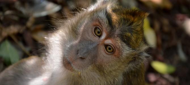 Pangandaran Part II : Une réserve naturelle à découvrir…